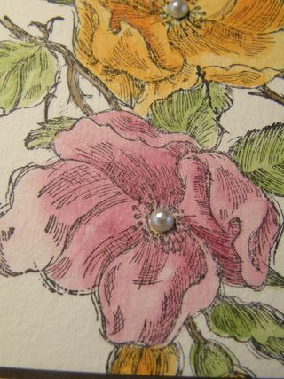 Flowers upclose