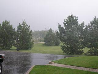 Rain holly