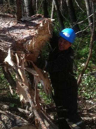 Mulching 3